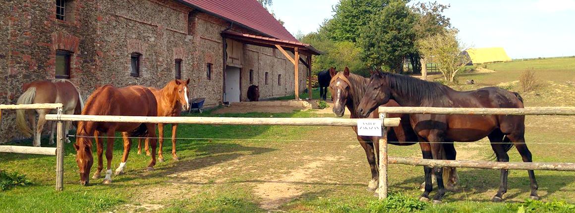 Domov pro koně - stáj pro koně