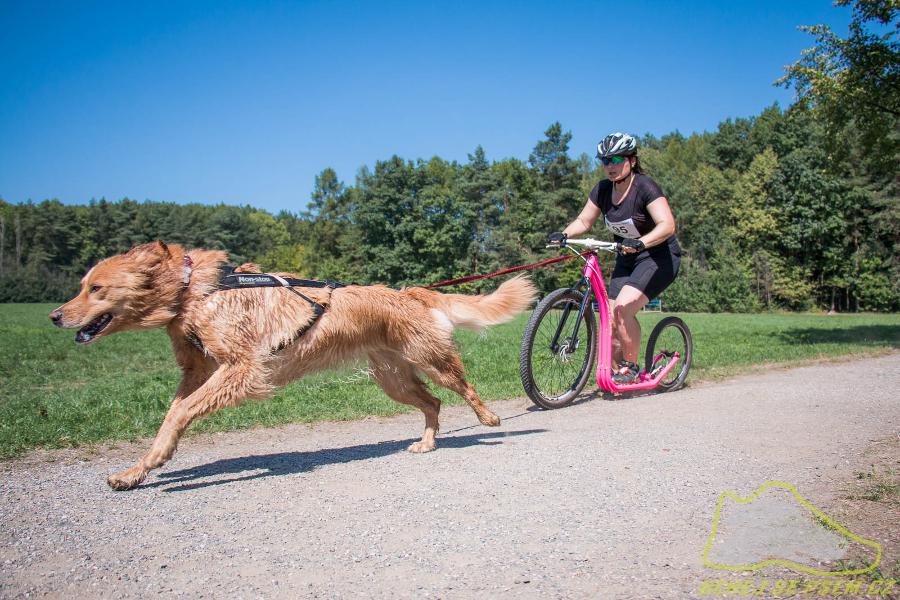 scooterjoring-kolobezka-pes-non-stop-dogwear-01