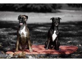 Náhradní potah na matraci pro psy DOOOP Xtrem 80x60