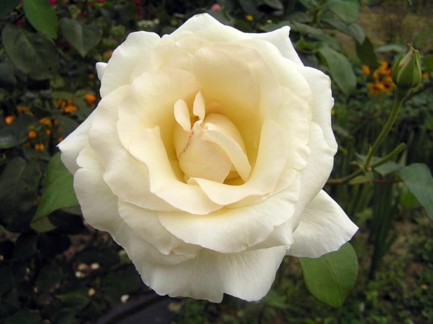 Květ života – Poselství od Zdroje