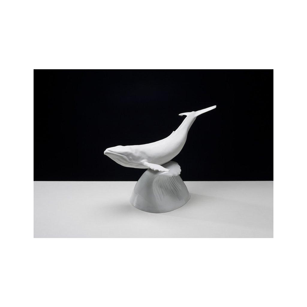 fin whale 800