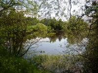 Rybník u cesty z vesnice - směr Suky