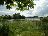Pikárecký rybník z pohledu od vesnice