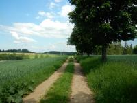 Polní cesta k lesu lemovaná loukami a poli