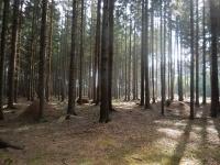 Mraveniště v lese nedaleko Bobrůvky