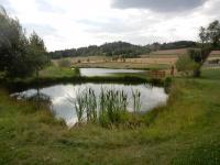 Soustava rybníčků poblíž naučné stezky