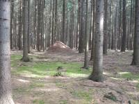 Jedno z mnoha mravenišť stojících uprostřed lesa