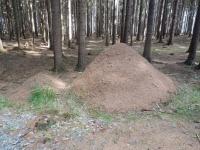 Mraveniště u lesní cesty vedoucí kolem Lind do Bobrůvky