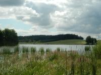Pikárecký rybník s panoramatem lesů v dáli