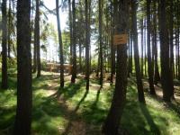 Lesní cestička se směrovkou