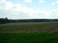Jedno z nejvyhledávanějších polí u hlavní silnice
