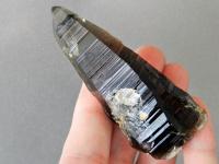 Kónická rýhovaná záhněda - Laserová hůlka z České republiky