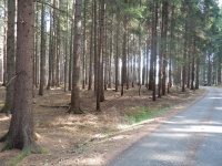 Zpevněná lesní cesta kolem mravenišť