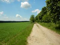 Prašné cesty lemující pole kolem obce