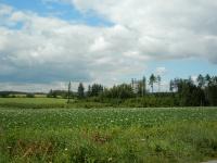 Rozkvetlé bramborové pole za vesnicí