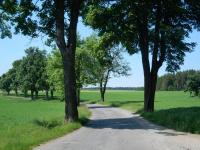 Silnička k Rousměrovu od obce Bohdalec