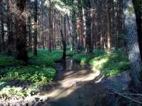 Potok Babačka ústící do řeky Oslavy
