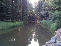 Řeka Oslava vlévající se do přehrady Mostiště