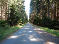 Zpevněná cesta v lesích kolem Skleného