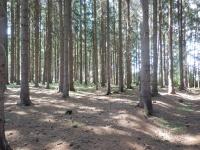 Četné lesy poblíž Skleného lákají houbaře