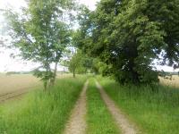 Polní cesta směřující k vlakové zastávce u Laštoviček