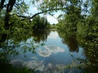 Pohled na jeden z místních rybníčků v krásné přírodě Vysočiny