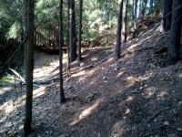 Halda - výsypka z těžebních štol v lese