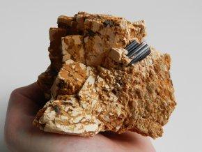 albit skoryl bily kosticky prirodni surovy obrazky 1