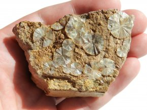 wavelit prirodni kamen slunicka vejirky cr obrazky 1