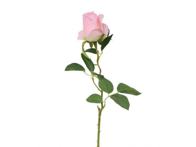 slunečnice květ