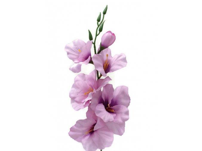 narcis květ