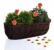 Proutěné obaly na květináče