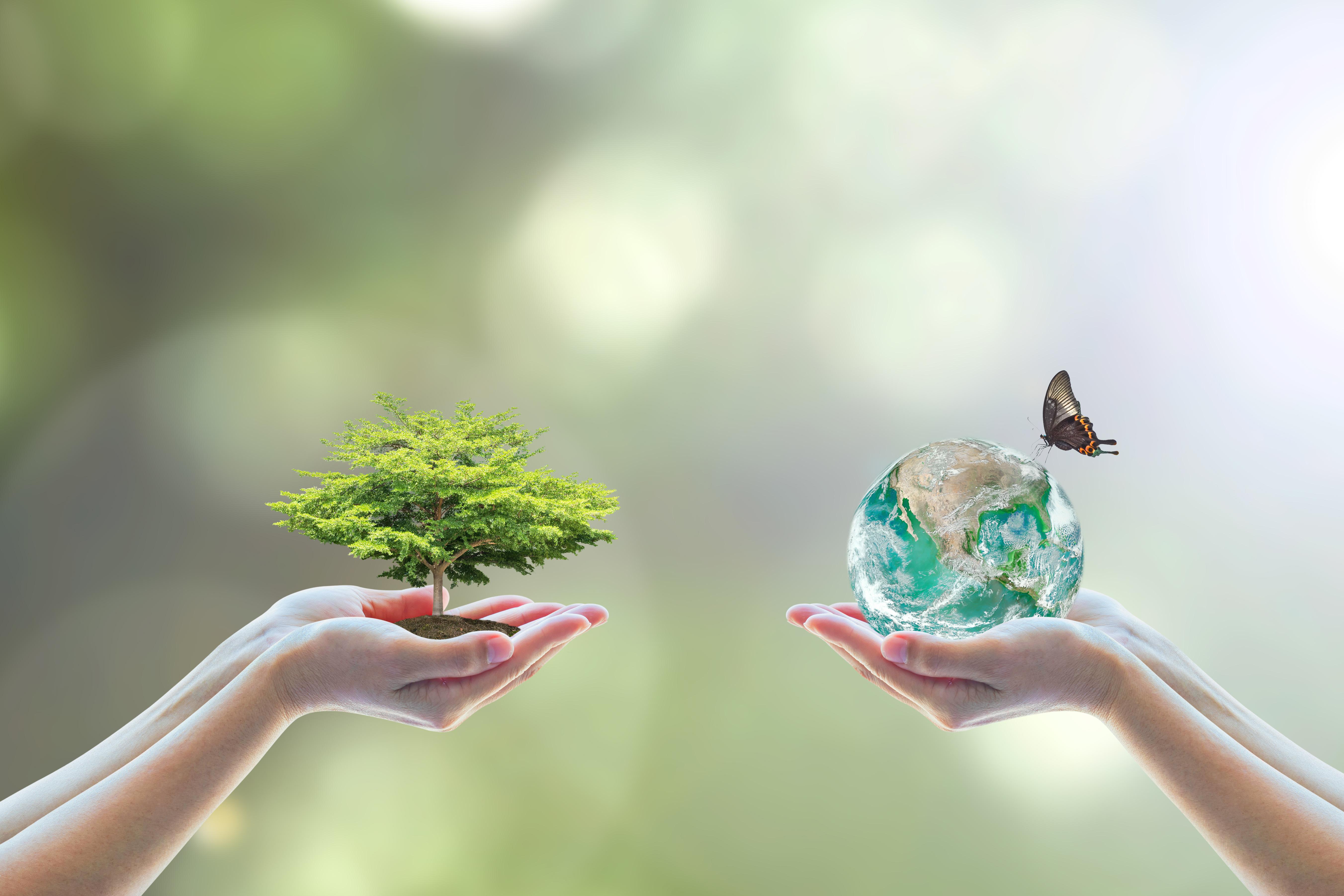 5 dobrých důvodů, proč vyměnit plasty za dřevo