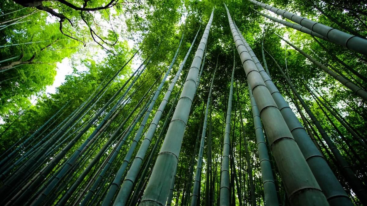 Pracovna v bambusovém kabátku: Jak na ni?