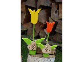 Tulipán s přáníčkem