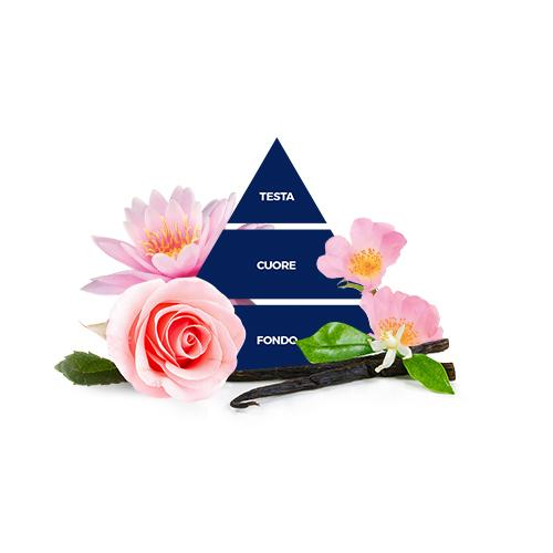 piramida-ruza