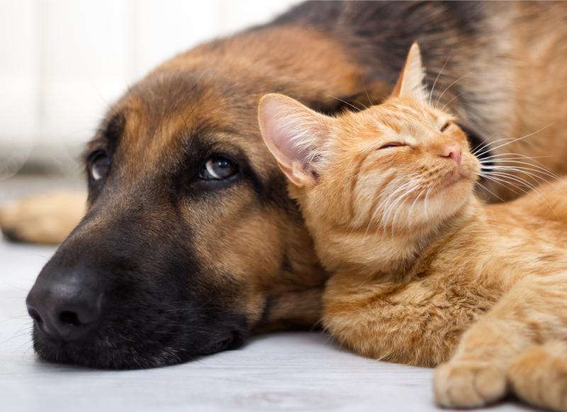 Akutní pankreatitida psů a koček