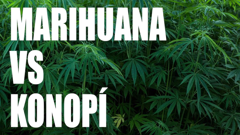 Marihuana je droga, konopí nikoliv. (2 minuty čtení)