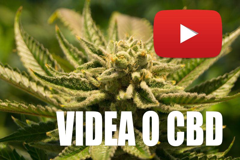 5 nekomerčních YouTube videí o CBD