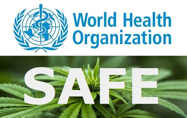 Co o CBD říká zpráva Světové zdravotnická organizace?