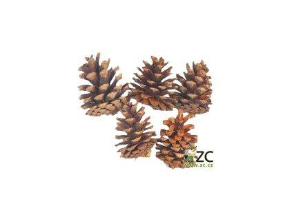 Dekorace - Blue Pine 4ks