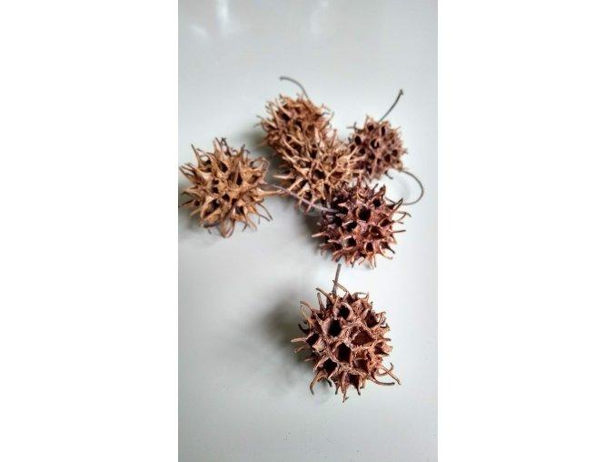 Amberbaum loose natur 6ks