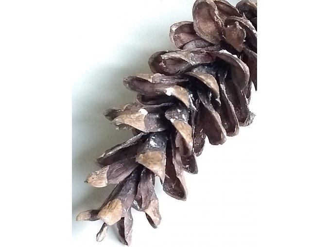 Pinus strobus šiška 3 ks