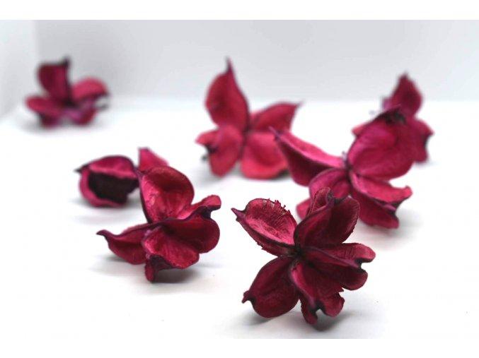 Cotton flower fuchsia 6ks