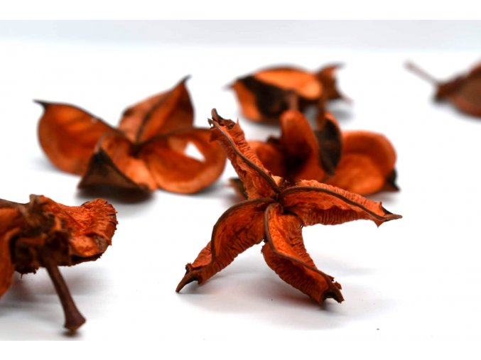 Cotton flower orange 6ks