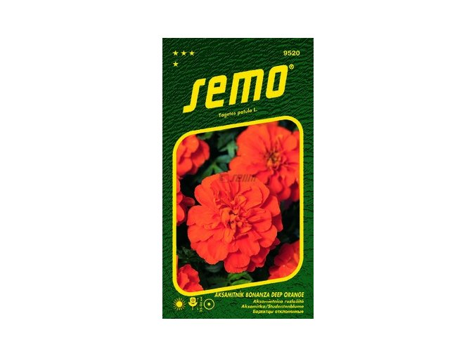 40451 aksamitnik rozkladity bonanza deep orange 30s
