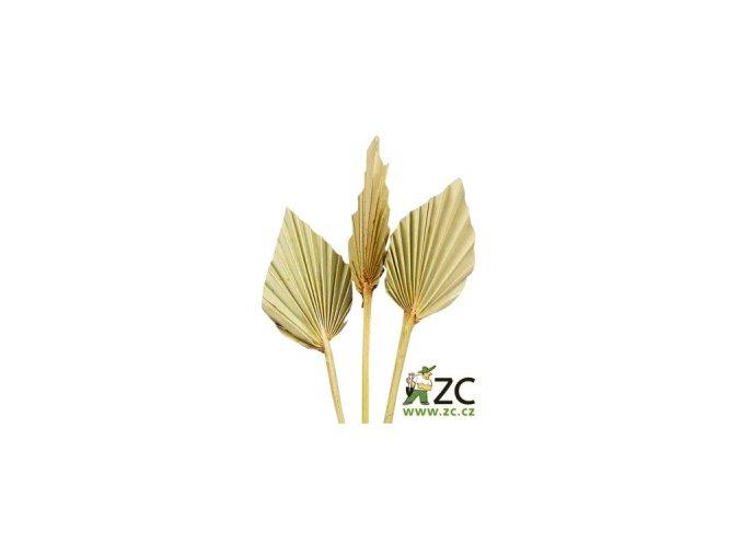 Dekorace - Palmový list ve tvaru oštěpu 4ks