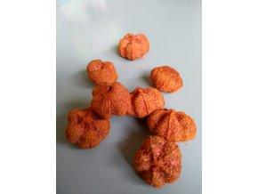 Gaya fruit orange 8ks