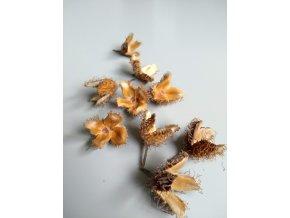 Fagus sylvatica plod 15 ks