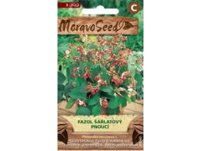 43304 fazol sarlatovy pnouci moravoseed